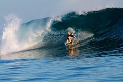 Surfing Samoa. A surfer catching a wave in Samoa Stock Image