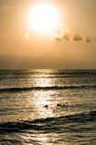 Surfing at Sunset. Backlight Silhouette Surfer in the Ocean at Sunset Royalty Free Stock Photography