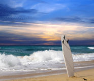 surfingbräda Royaltyfri Foto