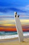 Surfingbräda Arkivfoton