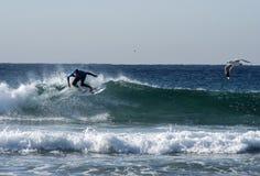 Surfingowiec i Seagulls Zdjęcia Royalty Free