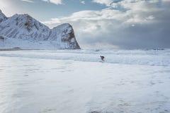 Surfingowiec podbija fale na śnieżnej plaży otaczającej górami w Norwegia zdjęcie stock