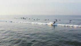 Surfingowowie czeka? na fale wcze?nie rano przy ?witem w huntington beach CA zbiory