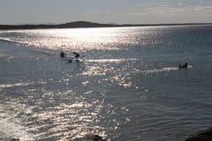 Surfingowowie i SUPs na oceanie fotografia royalty free