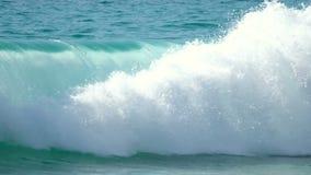 Surfingowowie unosi się na ocean fala zbiory