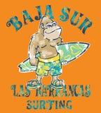 Surfista bonito do gorila de Baja Sur Foto de Stock