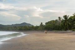 Surfista che cammina sulla spiaggia Fotografia Stock