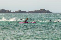 Surfista com a vagem do golfinho comum de Nova Zelândia em Wellington fotos de stock royalty free