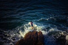 Surfista con il bordo che salta in acqua immagini stock libere da diritti