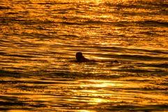 Surfista della siluetta al tramonto Immagini Stock Libere da Diritti