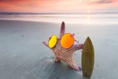 Surfista delle stelle marine sulla spiaggia immagini stock