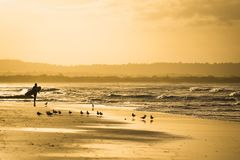 Surfista em Byron Bay fotografia de stock royalty free