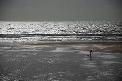 Surfista solo su una spiaggia Immagini Stock