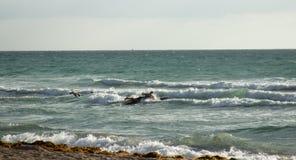 Surfistas de Florida Imagens de Stock