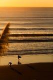 Surfistas na praia no por do sol Imagens de Stock