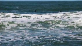Surfisti che portano le mute umide nell'attesa delle onde di oceano archivi video
