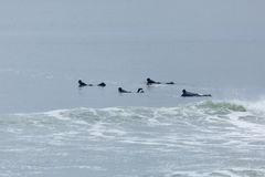 Surfisti di altezze della spiaggia Fotografia Stock