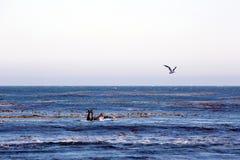 Surfisti in Los Angeles-area Fotografie Stock Libere da Diritti