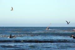 Surfisti in Los Angeles-area Fotografie Stock
