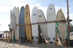 Surfs Up Royalty Free Stock Image
