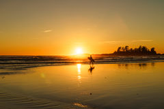 Surfs Up. Surfer at sundown at Chesterman Beach in Tofino, British Columbia, Canada Royalty Free Stock Photography