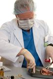 Surgeon or doctor with a kidney