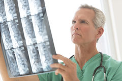 Surgeon Examining X-Ray Report. Mature male surgeon examining X-ray report in clinic Royalty Free Stock Photos