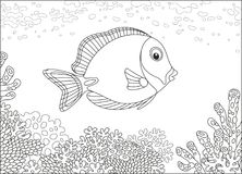 Surgeon fish on a coral reef. A surgeonfish swimming over amazing corals in a tropical sea, a black and white vector illustration in cartoon style for a coloring Royalty Free Stock Images