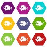 Surgeon fish icon set color hexahedron. Surgeon fish icon set many color hexahedron isolated on white vector illustration Royalty Free Stock Image