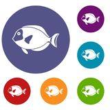 Surgeon fish icons set Royalty Free Stock Image