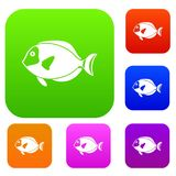 Surgeon fish set collection Stock Images