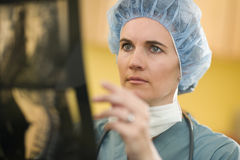 Surgeon looking at X-rays. Serious woman doctor analyzing X-rays Stock Photography