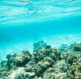 Surgeonfish και Clownfish στο Ειρηνικό Ωκεανό Στοκ Φωτογραφίες