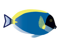 Surgeonfish.  Stock Photography