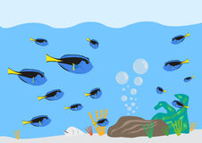 Surgeonfish Paracanthurus hepatus gathering concept. Editable Clip Art. Royalty Free Stock Photos