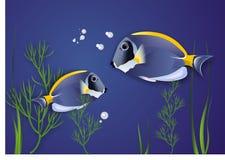Surgeonfish. Vector. Stock Image