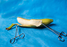 Surgical medical instruments. Surgical clamps holding a banana peel Stock Photos