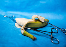 Surgical medical instruments. Surgical clamps holding a banana peel Royalty Free Stock Photo
