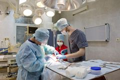 Surgical operation of a dog in a veterinary clinic stock image