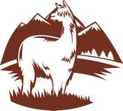 Suri alpaca llama with mountains Royalty Free Stock Photos