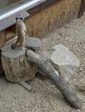 Surikat, o meerkata Fotografía de archivo