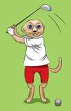 Surikata -高尔夫球运动员 免版税库存照片