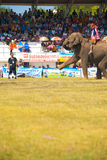 Surin Elephant Kicking Soccer Ball High V Stock Images