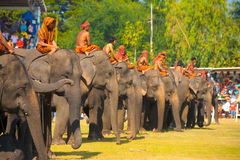 Surin Elephant Line Up Waiting Field Royalty Free Stock Image