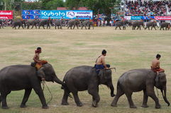 The Surin Elephant Round-up Royalty Free Stock Images