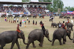 The Surin Elephant Round-up Stock Photo