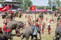 The Surin Elephant Round-up Royalty Free Stock Photos