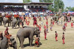The Surin Elephant Round-up Stock Image