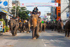 Surin Elephants Roundup Parade Downtown. SURIN, ISAN, THAILAND - NOVEMBER 19, 2010: A large herd of elephants walk slowly down a downtwon street during the Royalty Free Stock Image