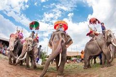 SURIN, TAILANDIA - 16 DE MAYO: Desfile de la ordenación en la F trasera del elefante Imagen de archivo